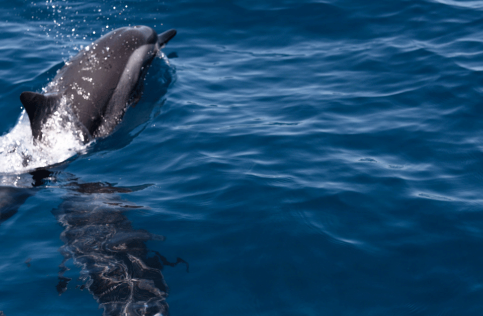 Dolphin protection in Mauritius - Here are the rules to follow!